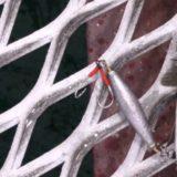 Aくんから報告。姫路市立遊漁センターでオモックを試し〇〇が8匹、地球外生命体も!?