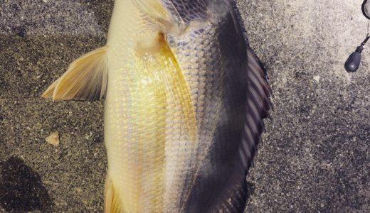 沖縄旅行の合間に沖縄っぽい魚を釣る。