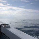 鳥取シロイカ釣りヤングバードで実釣レポート!イカメタル、オモリグ!