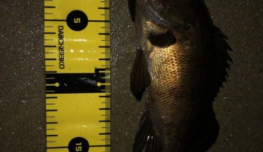 姫路港周辺でウキ釣りでメバルを狙う!