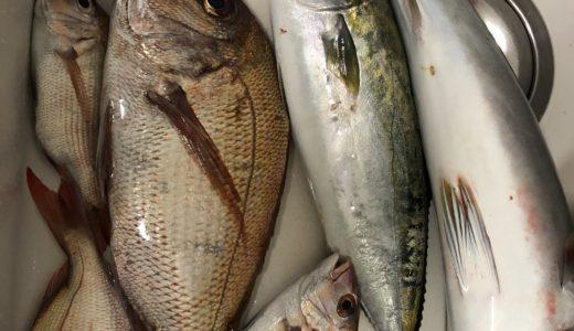 岡山 こんぴら丸でタイラバ、SLJでタイ、青物を釣る!!