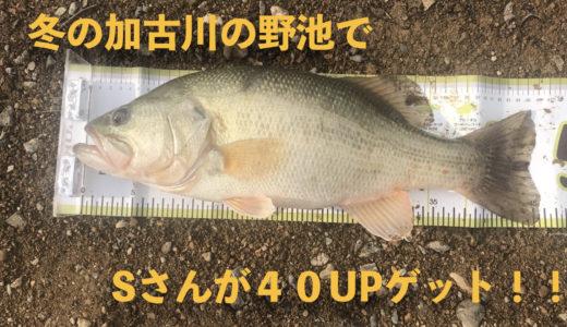 冬の兵庫加古川の野池で40UPのブラックバス!!